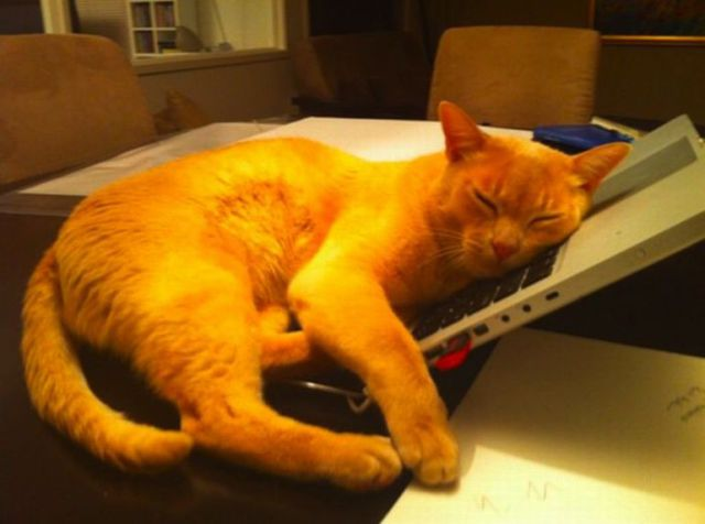 cats_find_the_oddest_places_to_get_comfortable_640_02
