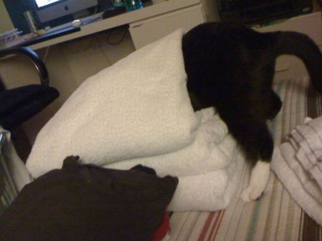 cats_find_the_oddest_places_to_get_comfortable_640_03