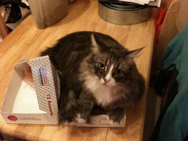 cats_find_the_oddest_places_to_get_comfortable_640_07