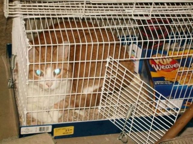 cats_find_the_oddest_places_to_get_comfortable_640_08