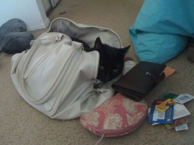 cats_find_the_oddest_places_to_get_comfortable_640_09