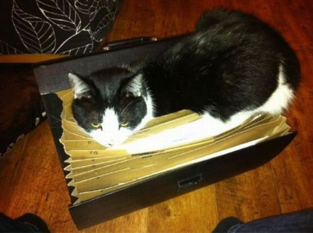 cats_find_the_oddest_places_to_get_comfortable_640_10