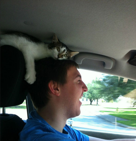 cats_find_the_oddest_places_to_get_comfortable_640_12