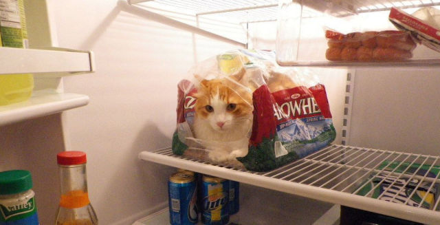 cats_find_the_oddest_places_to_get_comfortable_640_15
