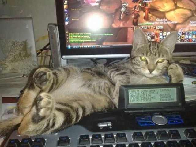 cats_find_the_oddest_places_to_get_comfortable_640_29