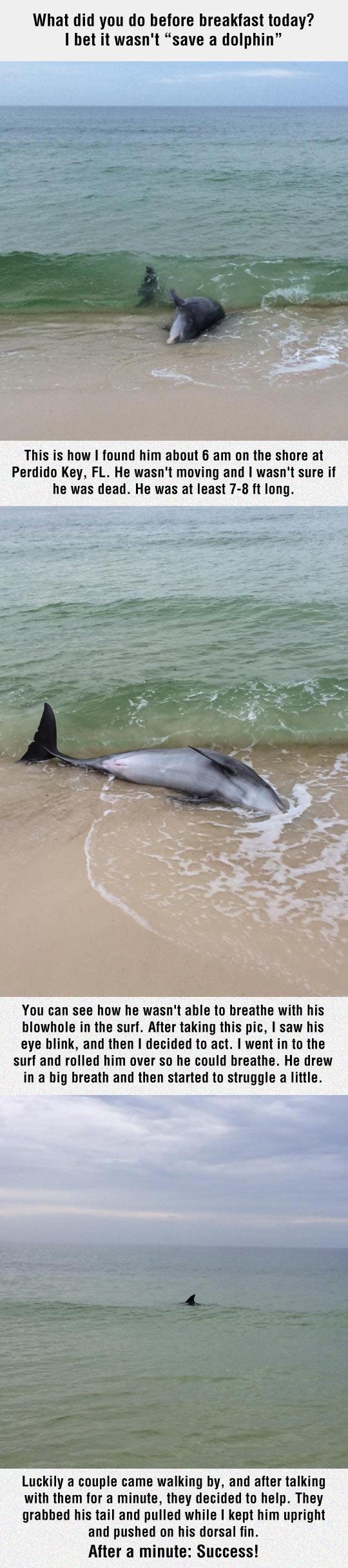 cool-dolphin-beach-saving-happy