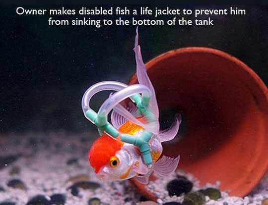 cool-fish-life-jacket-bubbles