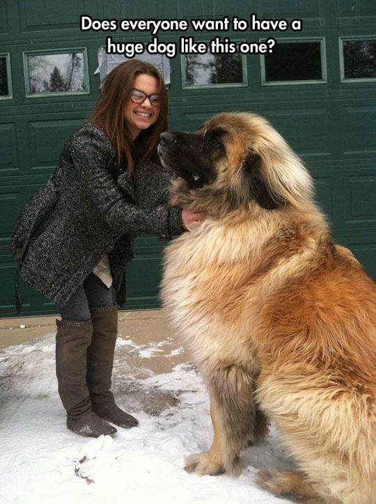 cool-giant-dog-furry-snow