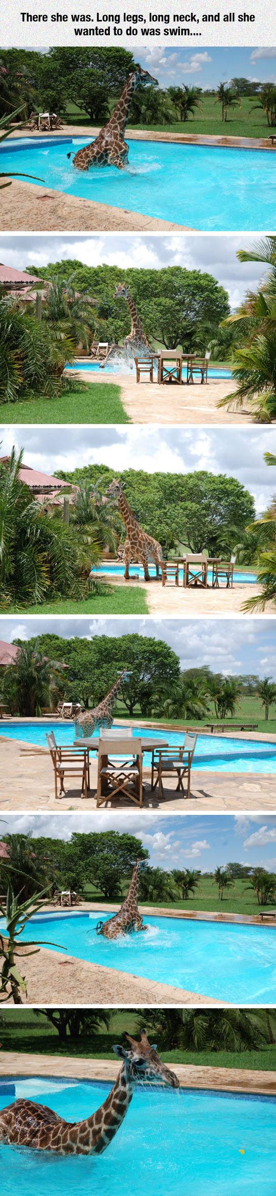 cool-giraffe-swimming-water-pool