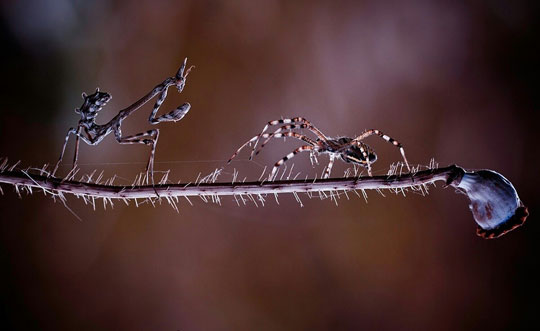 cool-insect-battle-branch