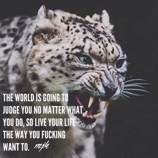 cool-quote-live-life-judging-tiger