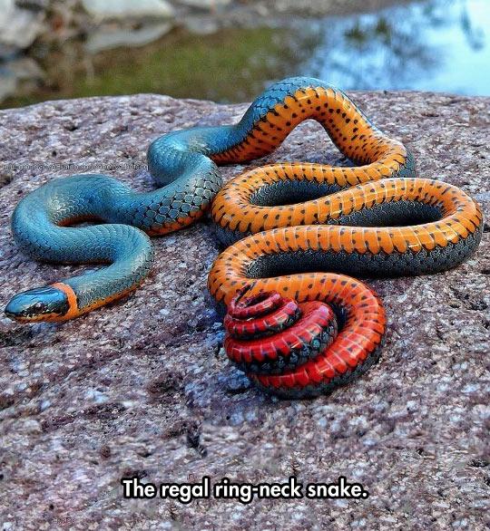 A Truly Beautiful Snake