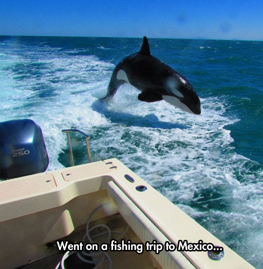 cool-whale-water-jumping-fishing-trip