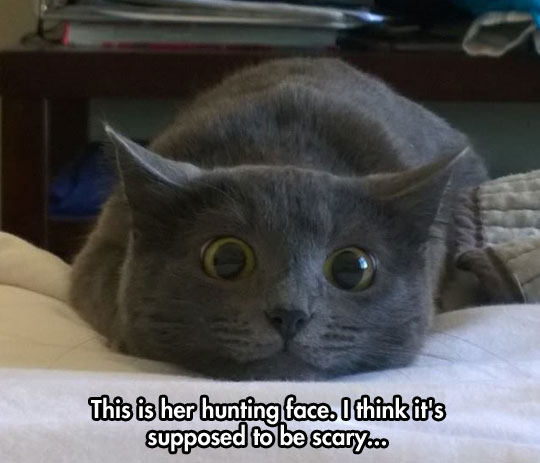 cute-cat-hunting-face-bed