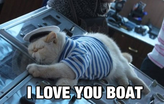 cute-cat-sailor-costume-sleeping