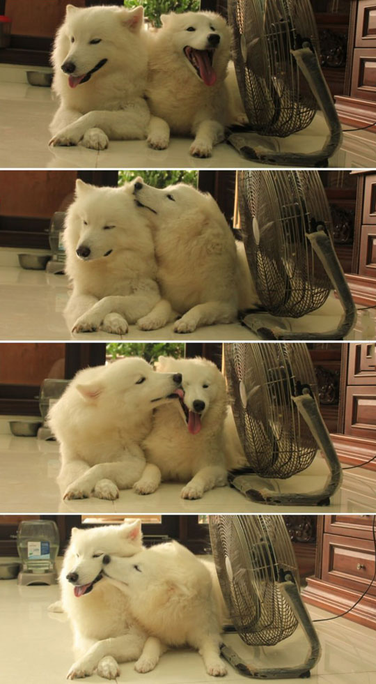 cute-dogs-love-lick-fan