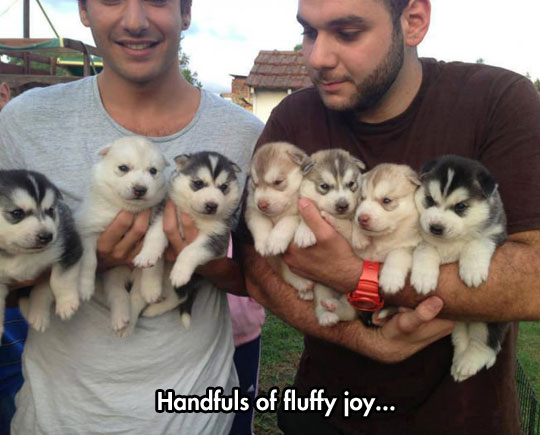 The Fluffiest And Cutest Puppies