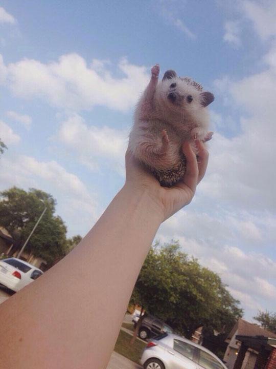 cute-hedgehog-waving-hand-sky