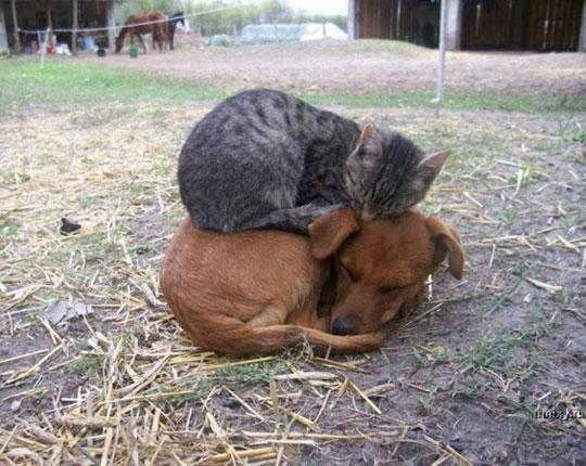 A Nice Pillow Doesn