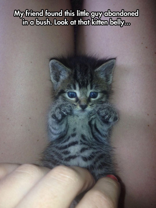 Abandoned Little Kitty