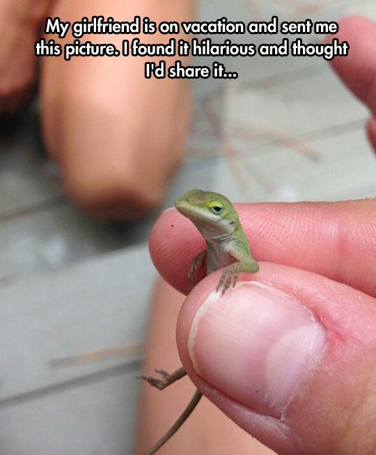 cute-little-lizard-fingers