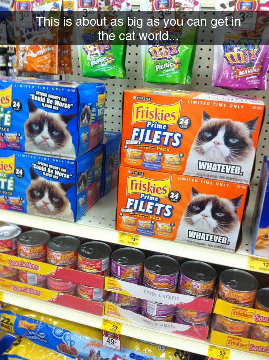 Grumpy Cat Everywhere