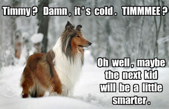 Lassie You
