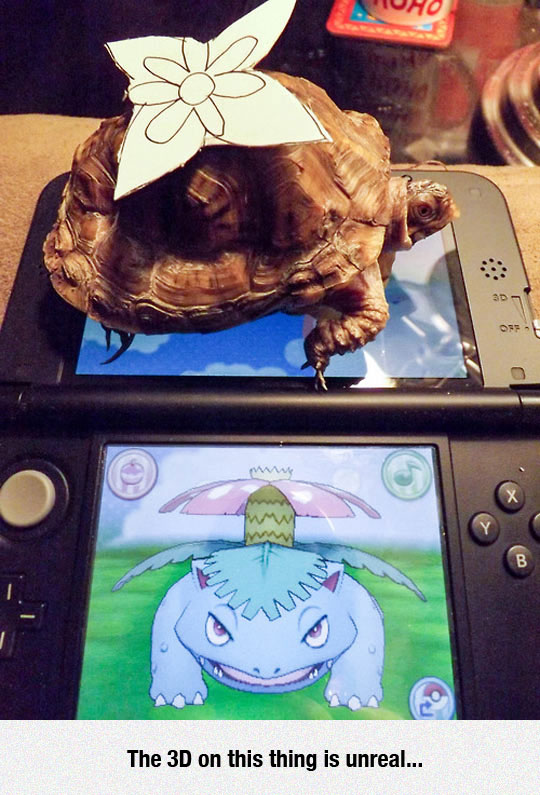 funny-Pokemon-turtle-real-3D