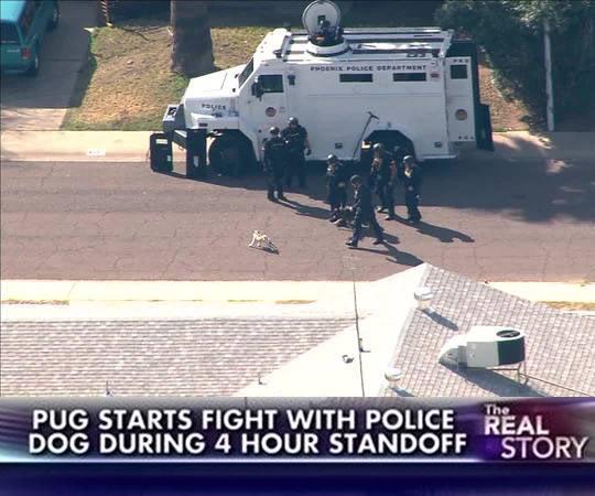 funny-TV-news-police-dog-pug