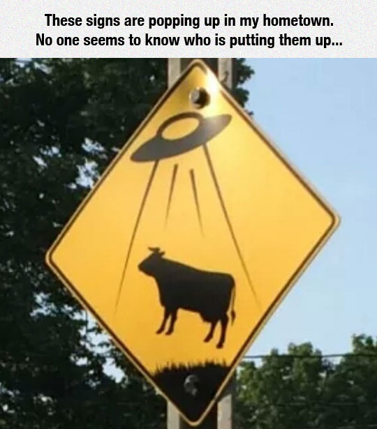 funny-UFO-road-sign-cow