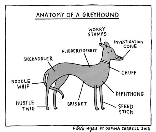 Greyhound Parts