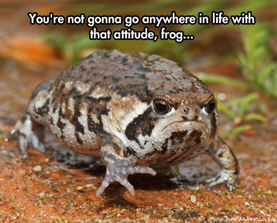 funny-angry-face-frog-attitude