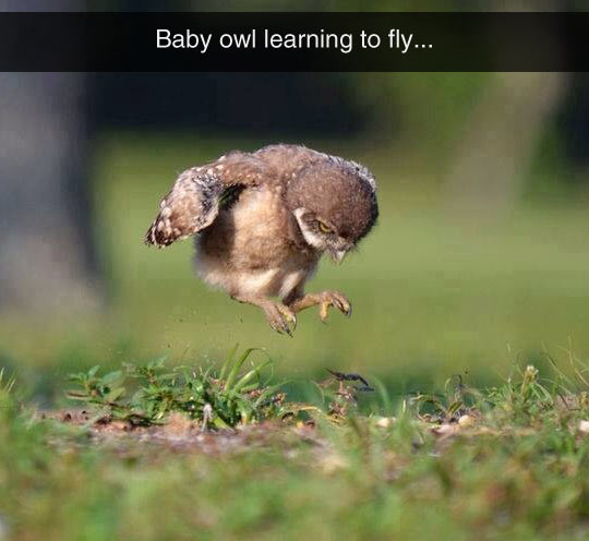 funny-baby-owl-learning-fly
