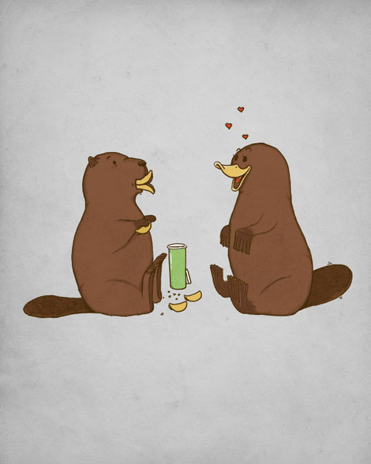 Love Explained, When A Beaver Seduces A Platypus