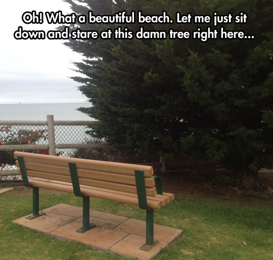 funny-bench-misplaced-tree-beach