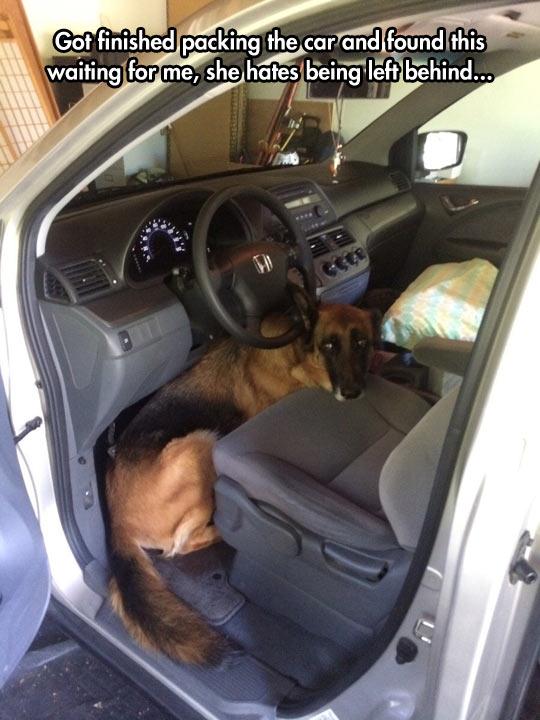 Smart Move, Dog