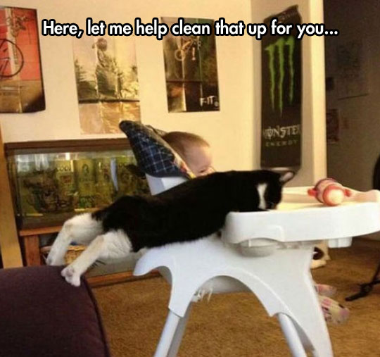 Cats: Helping You Clean Milk Since Always