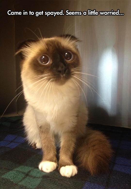 funny-cat-big-eyes-face