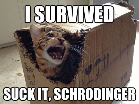 funny-cat-box-cardboard-survived