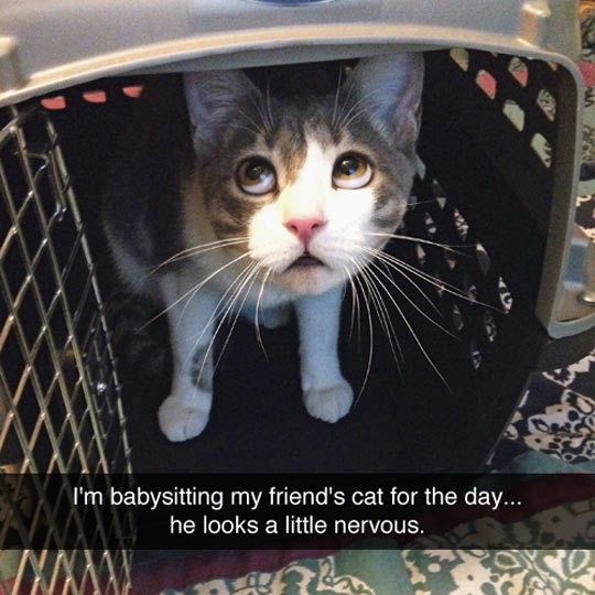 funny-cat-cage-scary-nervous