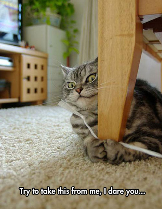 funny-cat-holding-string-surprised