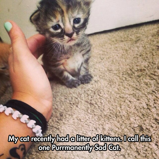 Sad Little Kitten