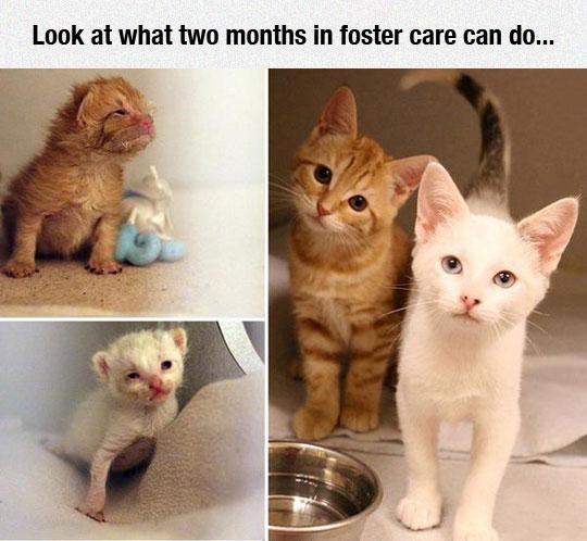 funny-cat-kitty-cute-baby