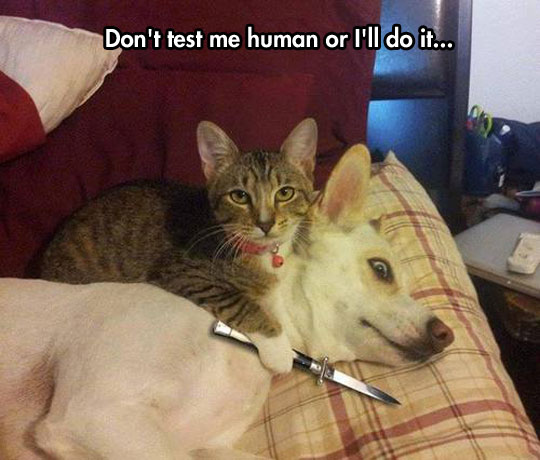 funny-cat-knife-dog-hostage