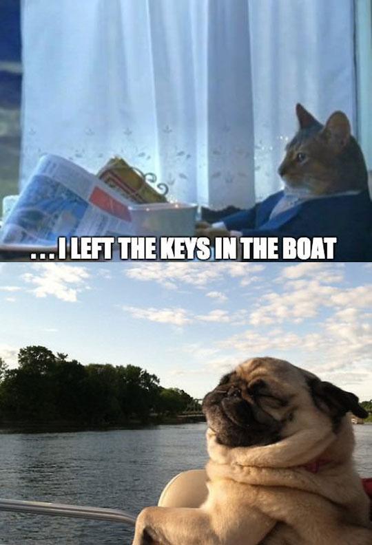 Living The Pug Life