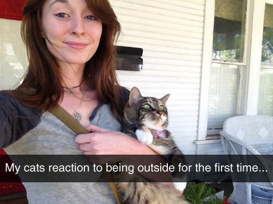 funny-cat-outside-first-time-girl-owner