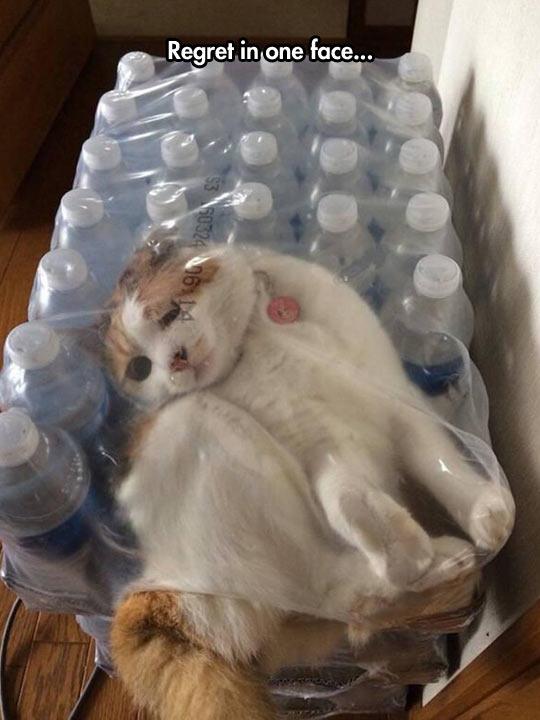 funny-cat-pack-bottles-regret