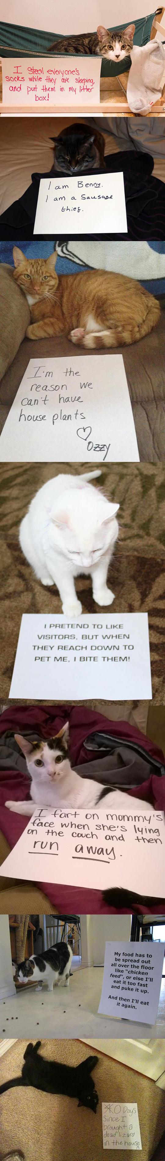 funny-cat-shaming-signs-cute-lizard