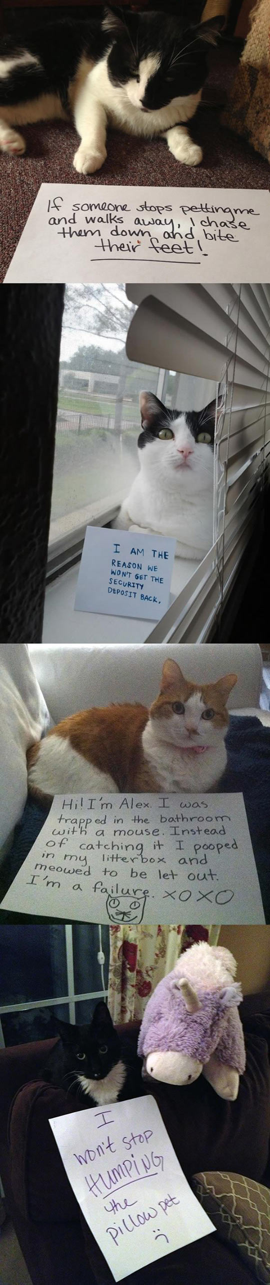 funny-cat-shaming-signs-cute-toy