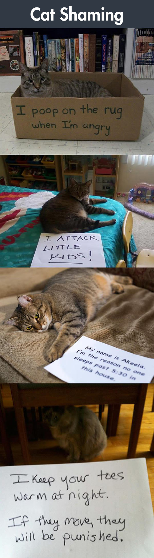 funny-cat-shaming-signs-cute